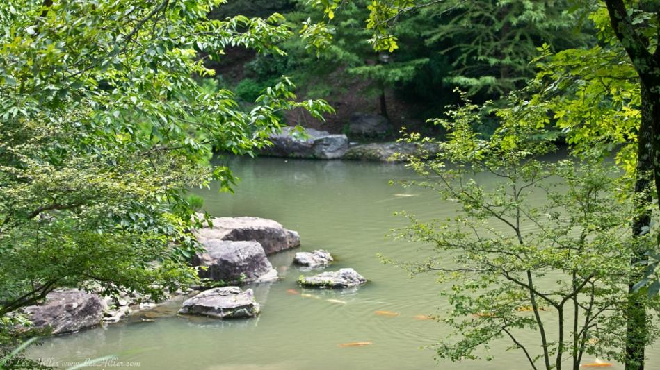 Garvan Gardens Garden of the Pine Wind Pond