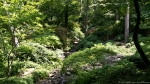 Garvan Gardens Garden of the Pine Wind