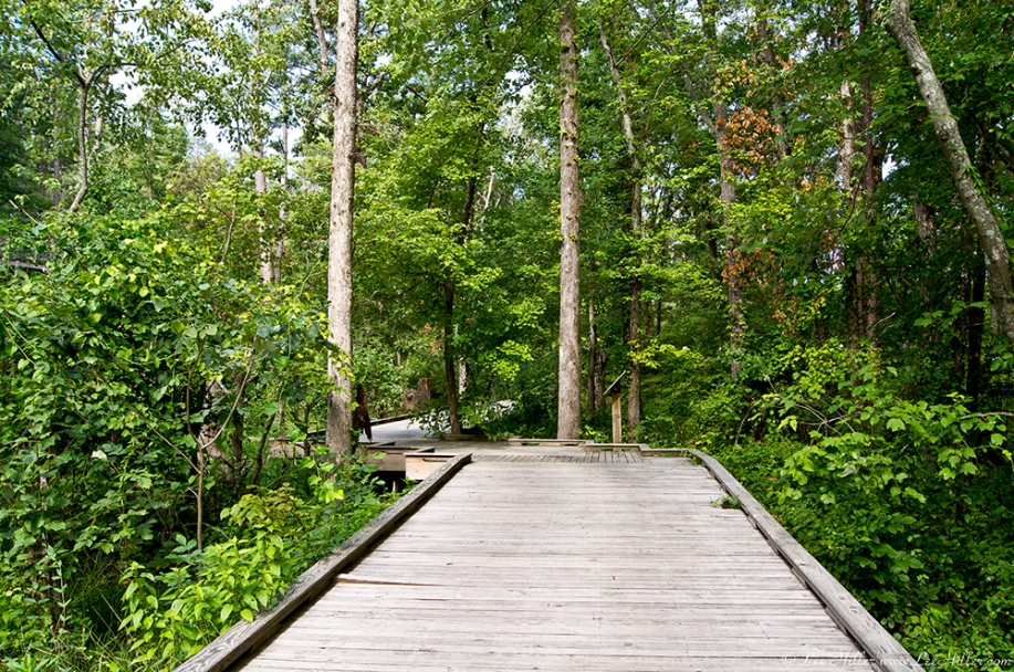 Garvan Gardens Hixson Family Woodland Nature Preserve Lowland Boardwalk
