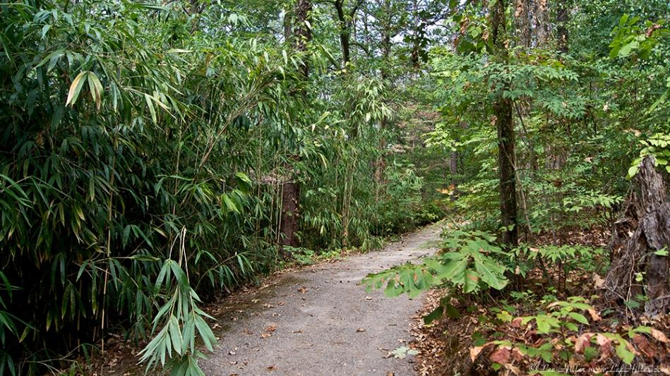 Garvan Gardens Hixson Family Woodland Nature Preserve