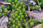 HSNP West Mt. Canyon Trail Star Moss