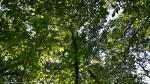 HSNP West Mt. Oak Trail  Canopy
