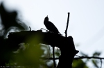 HSNP West Mt. Oak Trail Bird Silhoutte