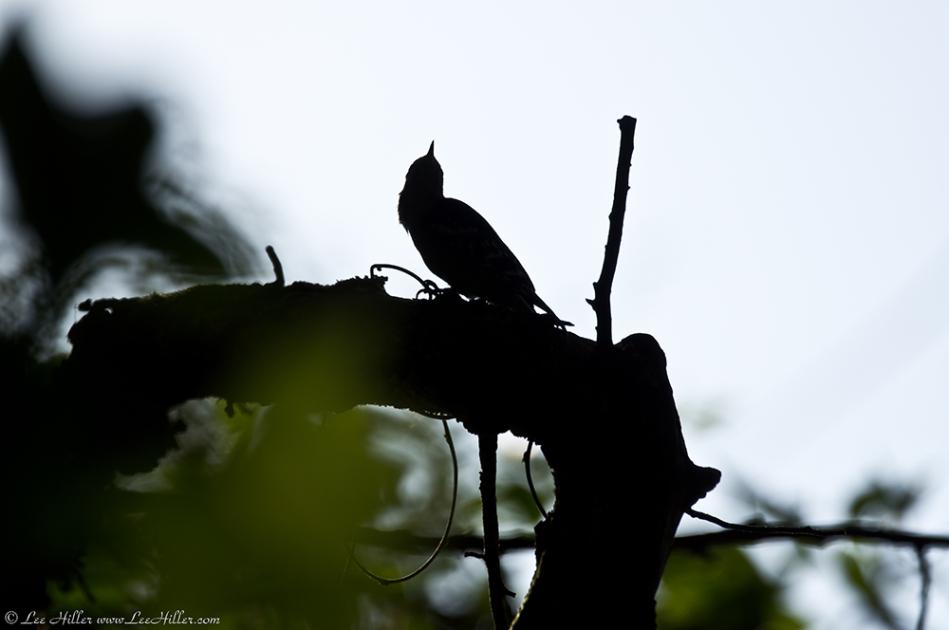 HSNP West Mt. Oak Trail Bird Silhoutte