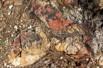 HSNP Goat Rock Trail Sunrise Rock