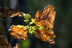 HSNP Gulpha Gorge Trail Dried Leaves