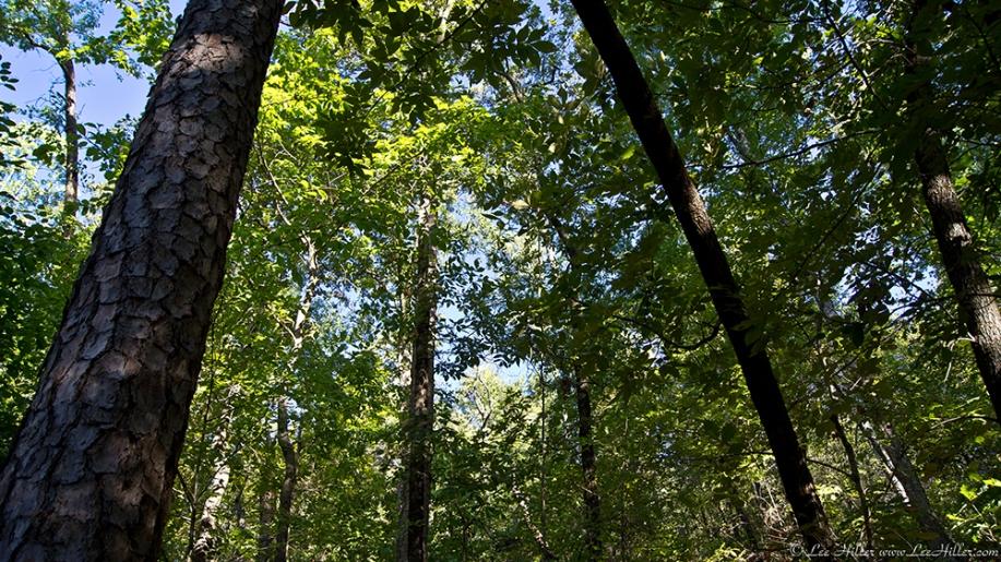 HSNP Upper Dogwood trail