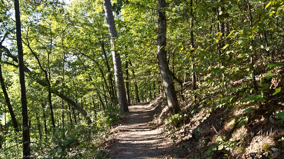 HSNP West Mountain Oak Trail Goldenrod
