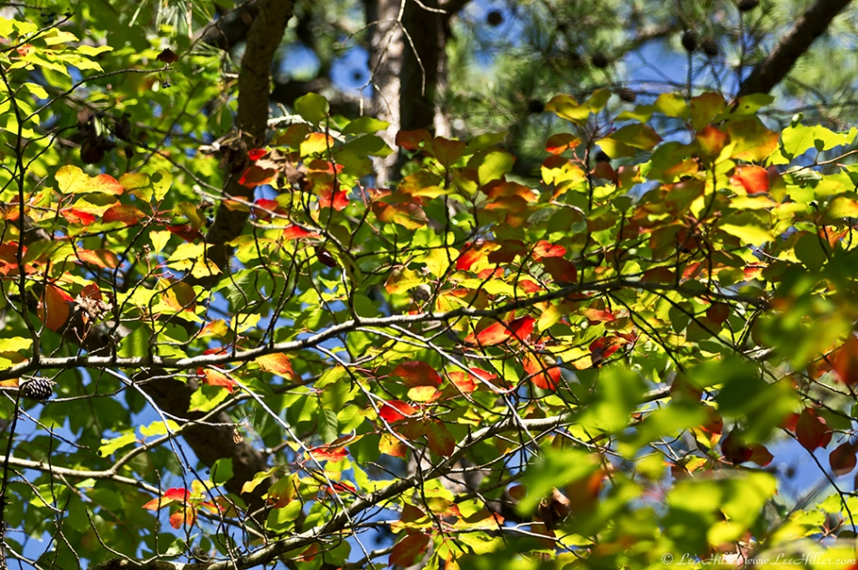 HSNP West Mountain Trail Autumn Leaves