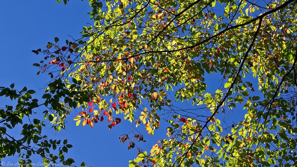 HSNP West Mountain Trail Autumn Leaves