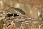 HSNP Fountain Trail Run-Away Squirrel