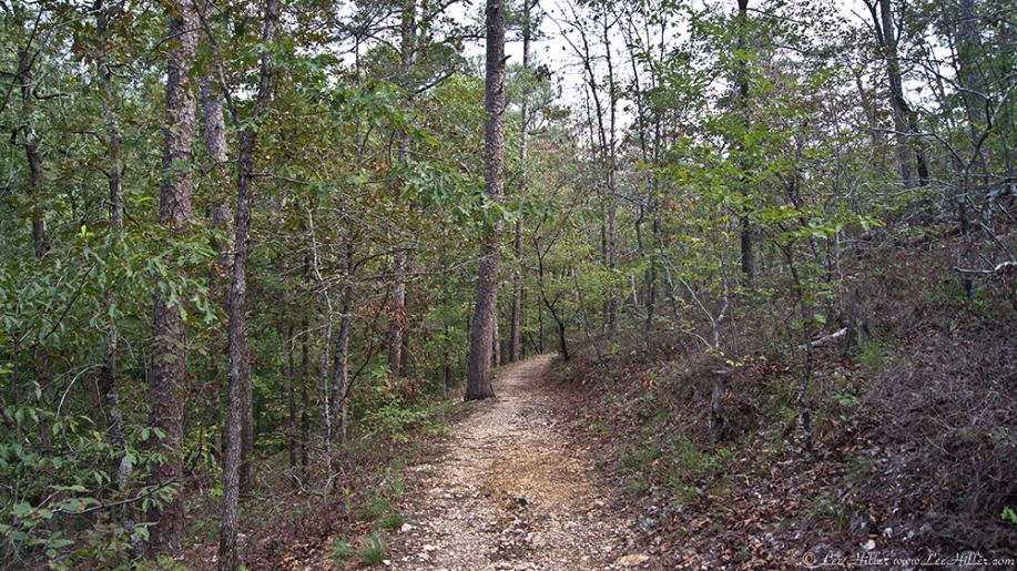 HSNP Floral Trail