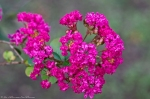 HSNP Tufa Terrace Trail Red Crepe Myrtle