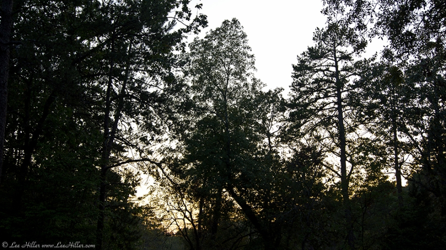 HSNP Sunset in the Forest