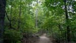 HSNP Lower Dogwood Trail at Twilight