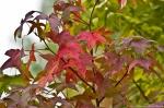HSNP West Mountain Autumn Leaves