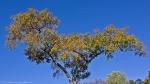 HSNP Fountain Street Autumn Tree