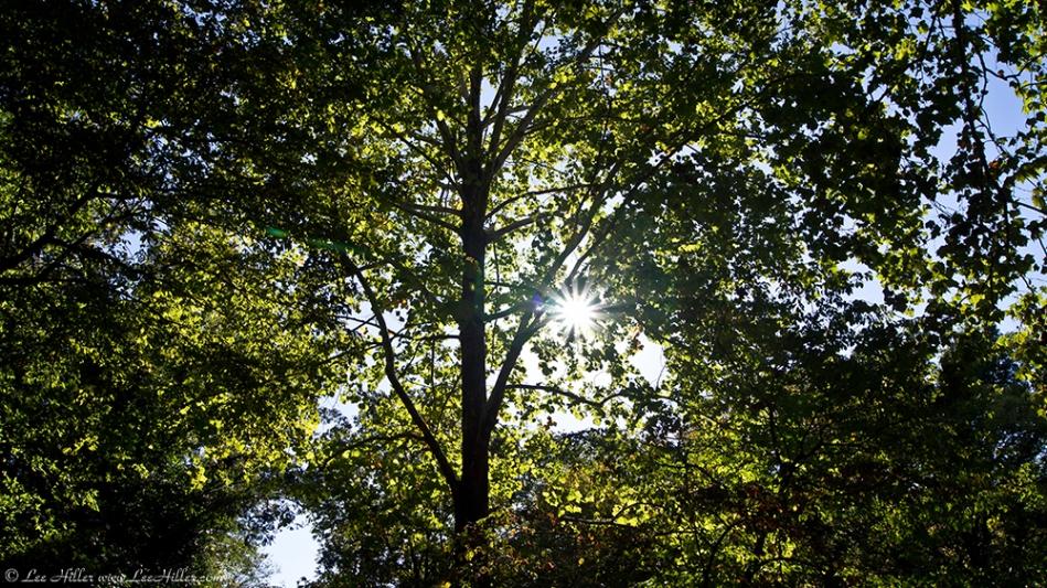 HSNP Promenade Canopy