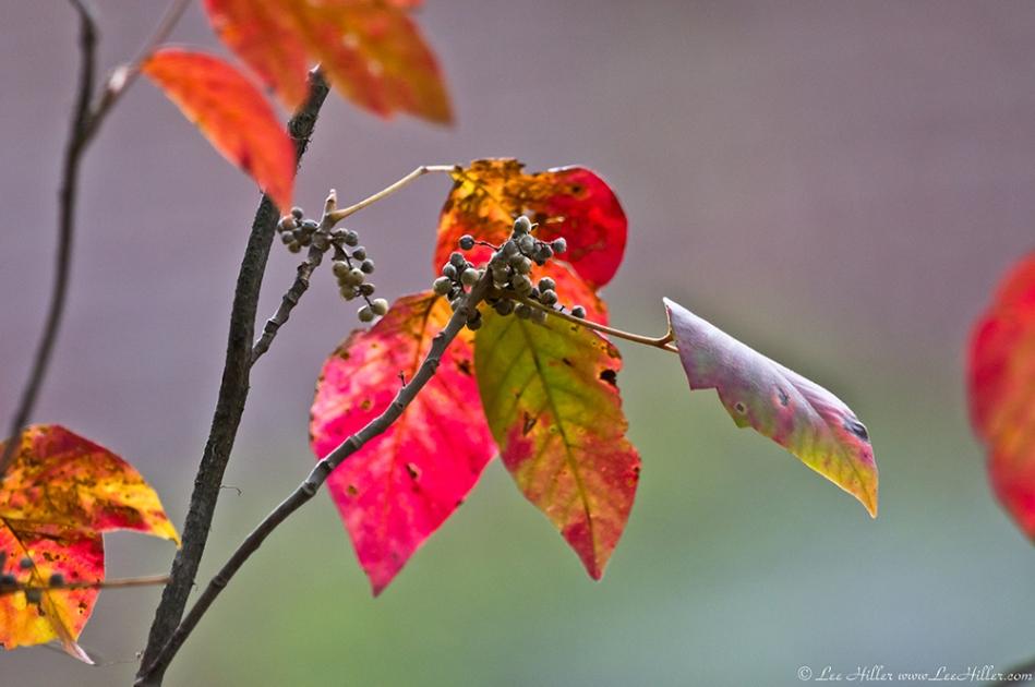HSNP Dead Chief Trail Autumn Leaves