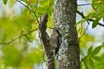 HSNP Dead Chief Trail Female Downy Woodpecker