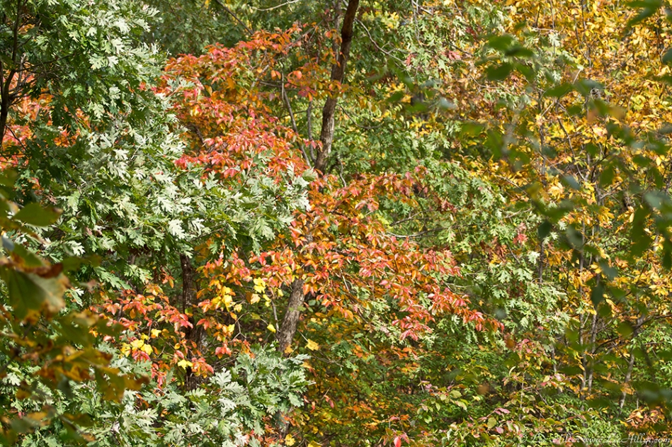 HSNP Hot Springs MT Trail Autumn Leaves