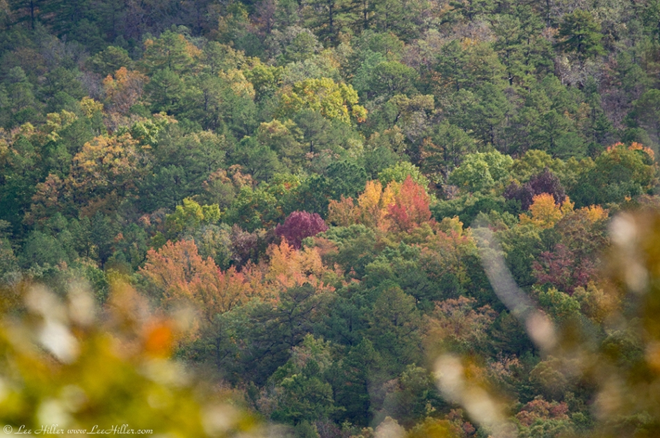 HSNP Indian Mountain Autumn Leaves