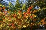 HSNP Lower Dogwood Trail Autumn Leaves