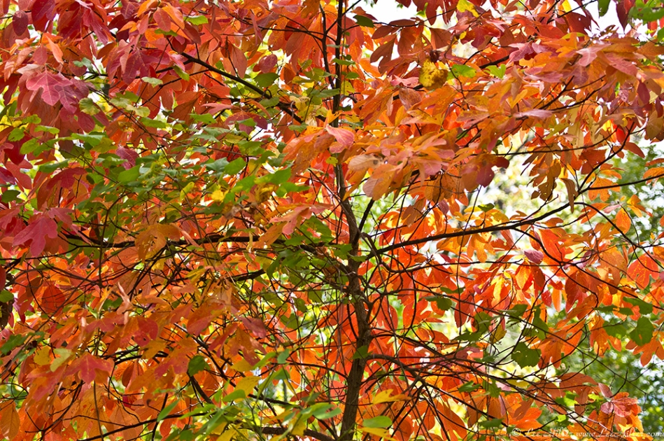 HSNP North Mountain Autumn Leaves