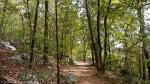HSNP Short Cut Trail Autumn