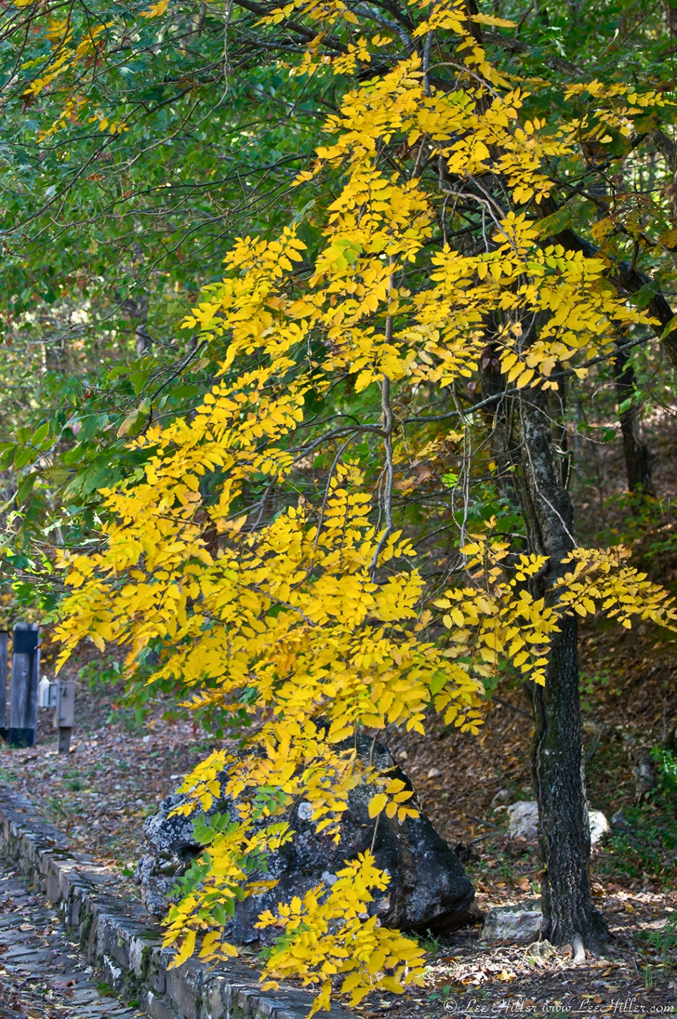 HSNP Hot Springs MT Rd Golden Leaves