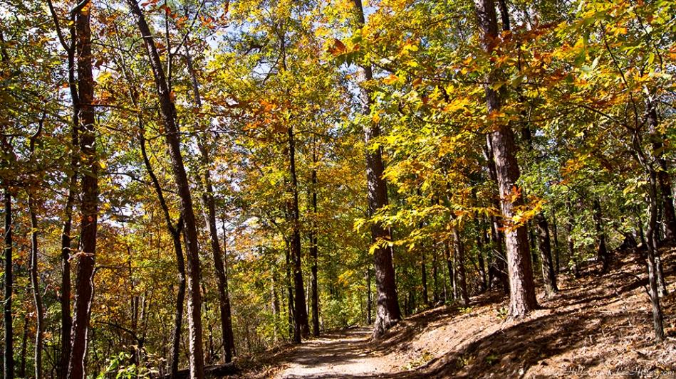HSNP Hot Springs MT Trail Autumn