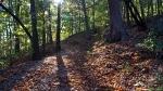 HSNP Floral Trail Autumn