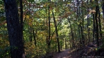 HSNP Lower Dogwood Trail Autumn