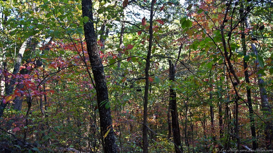 HSNP Upper Dogwood Trail Autumn