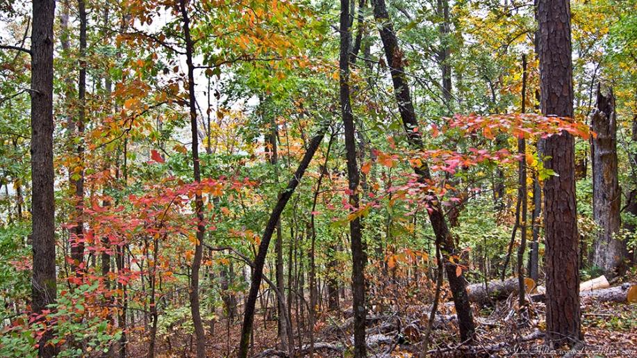 HSNP West Mt Canyon Trail Autumn