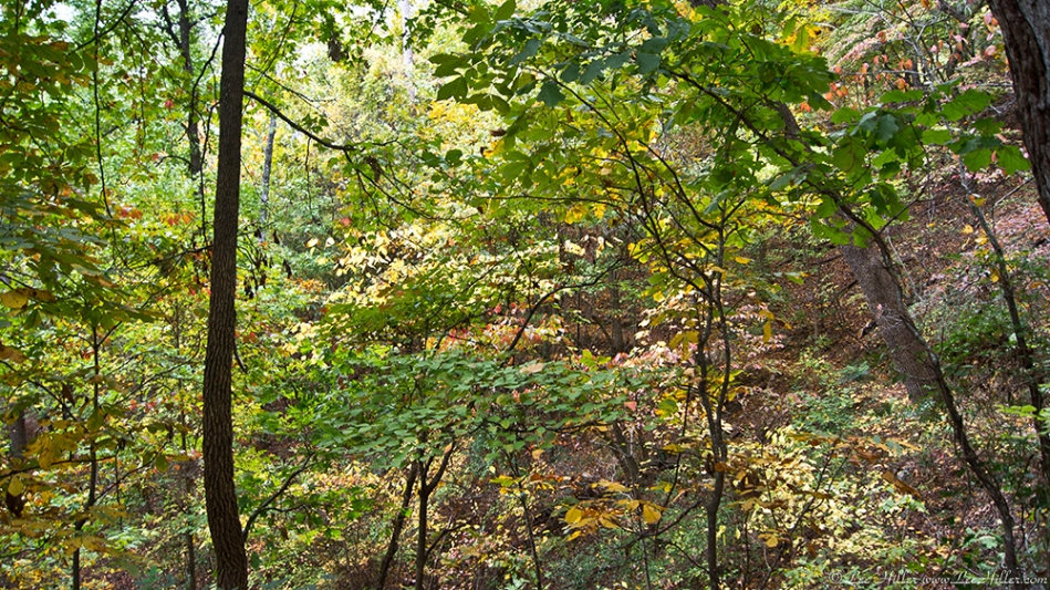HSNP West Mt Oak Trail Autumn