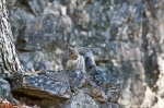 HSNP Fountain Trail Squirrel