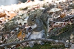 HSNP Fountain Trail Squirrel