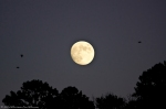 HSNP Hot Springs Mountain Moon Rise & Birds