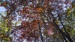 HSNP Lower Dogwood Trail Autumn
