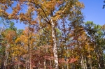 Garvan Woodland Gardens Camellia Trail Autumn