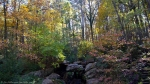 Garvan Woodland Gardens Canopy Bridge View