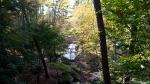 Garvan Woodland Gardens Pine Wind