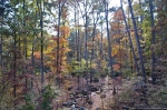 Garvan Woodland Children's Garden Autumn