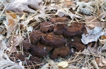 Garvan Woodland Gardens Camellia Trail Fungi