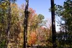 Garvan Woodland Gardens Hixon Preserve