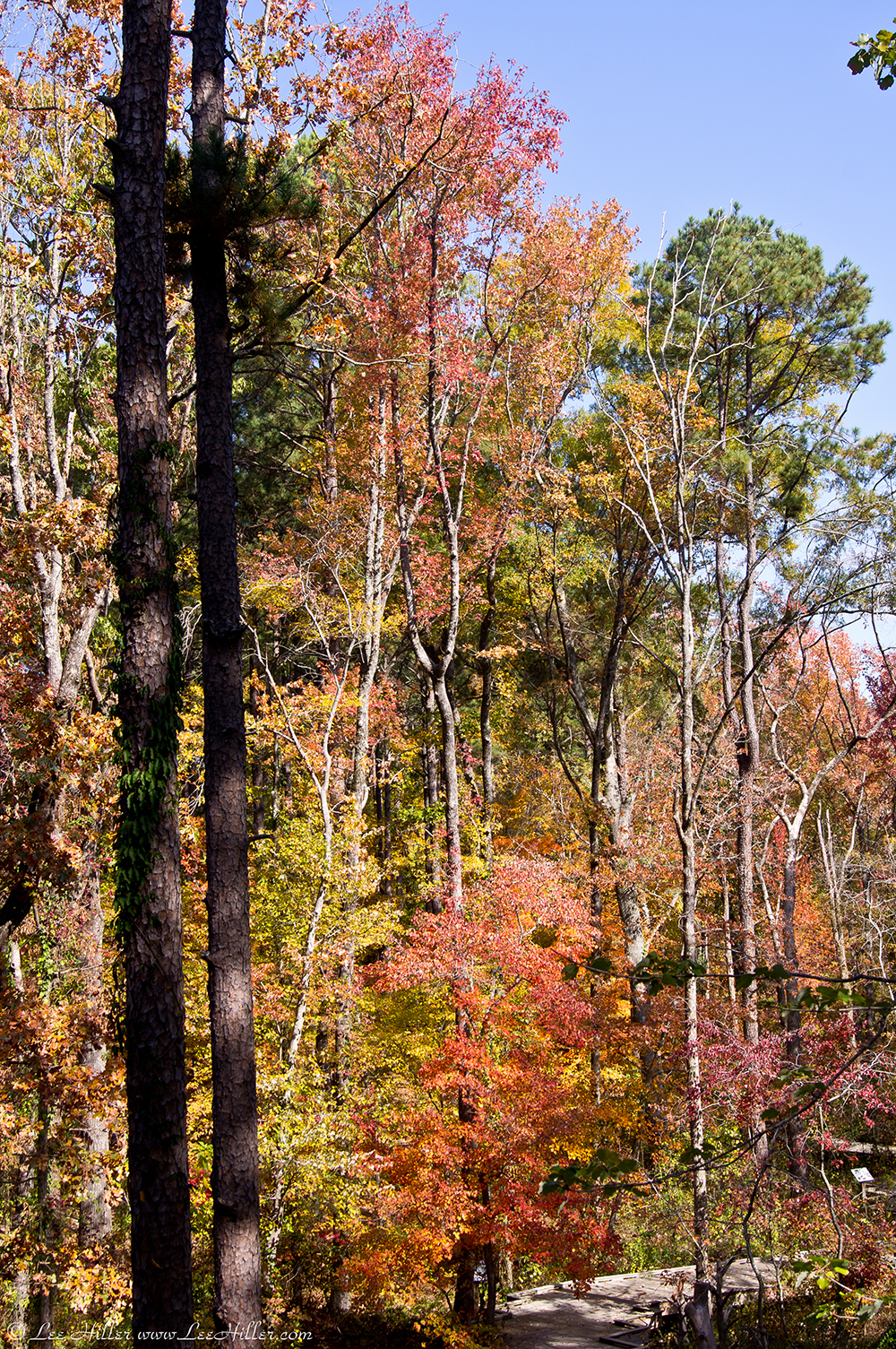 Garvan Woodland Gardens | Hike Our Planet - @HikeOurPlanet