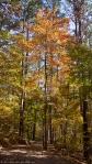 Garvan Woodland Gardens Hixon Preserve Autumn