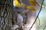 Garvan Woodland Gardens Squirrel