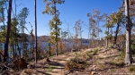 Lake Ouachita Caddo Bend Trail Tornado Damage